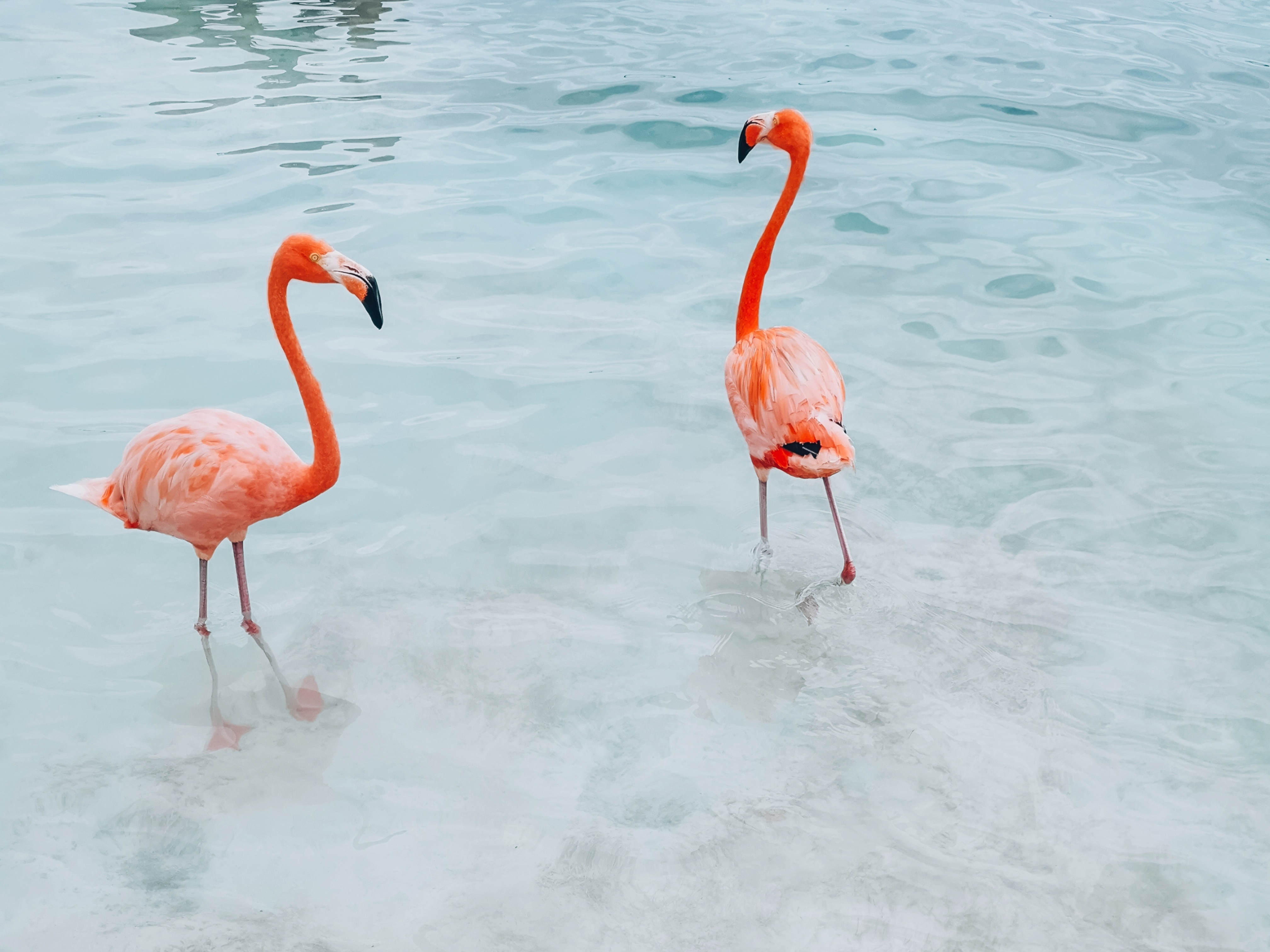 Nudes Proposes A Flamingo Observatory Made